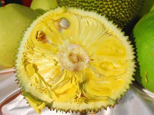 06 16 health benefits jack fruit
