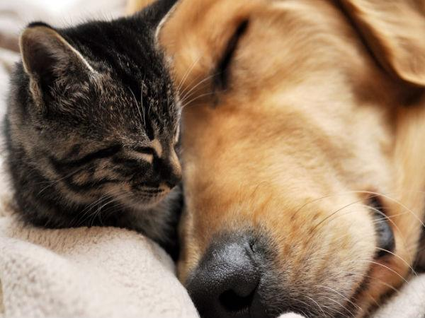 Relationship Lessons You Can Take From Your Pet