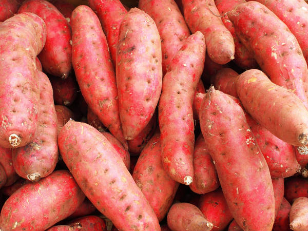 Sweet Potato Resists Cancer Possibility