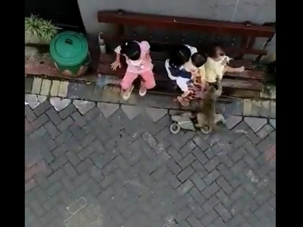 Monkey Riding A Bike Grabs Toddler, Drags Her