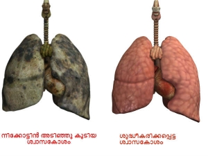 Eat This Food And You Will Flush Nicotine Out Of Your Lungs