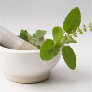 Tulsi Boosts Resistance From H1n