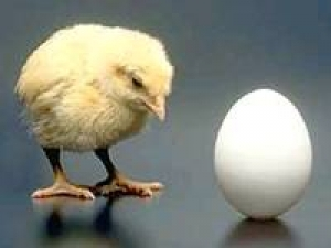 Chicken Came Before Egg