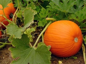 Gardening Easy Grow Vegetables Aid
