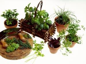 Common Spices Grow Garden Aid