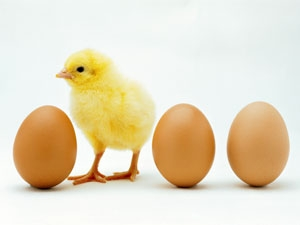 Egg Causes Prostrate Cancer Aid0200.html