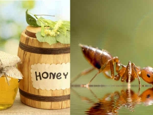 How To Keep Ants From Honey