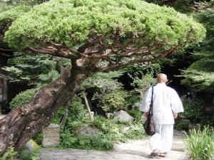 Zen Guidance To Oasis