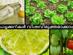 How Remove Pesticides From Vegetables Fruits