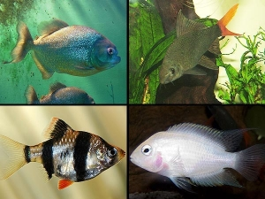 7types Of Fishes For Your Aquarium