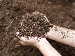 Tips To Improve Soil In Your Garden 008255