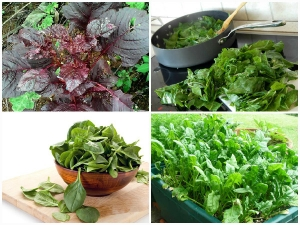 Spinach Is The World Healthiest Food