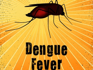 Things You Need Know About Dengu Fever
