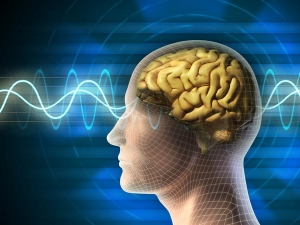 False Facts You Thought You Knew About Your Brain