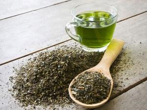 Green Tea Helps Ease Kidney Damage