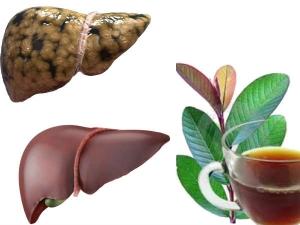 Incredible Benefits Of Guava Leaf Tea