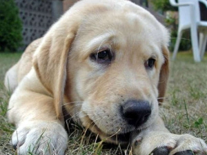Home Remedies For Heartworm Prevention In Dogs