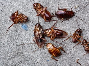 How Effectively Kill Every Cockroaches Your House