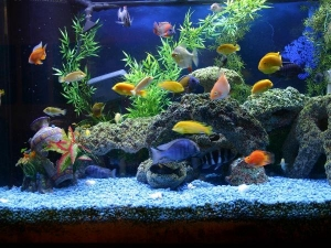 Myths About Keeping An Aquarium