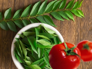 Steps To Can Your Tomatoes And Curry Leaves Keep Them Fresh For Longer