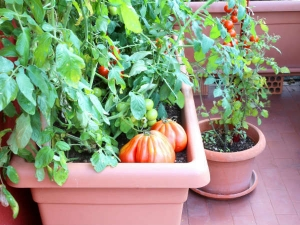 Set Up Your Own Terrace Vegetable Garden