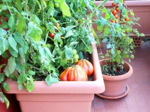 Set Up Your Own Terrace Vegetable Garden