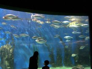 Feng Shui Tips Keep Aquarium
