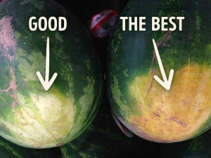 Tips To Pick Sweetest Watermelon