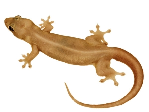 How Get Rid Lizards Using Home Remedies