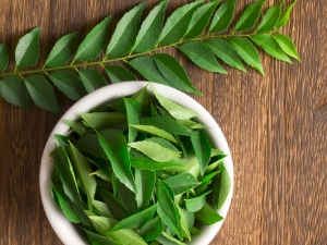 Eating Fresh Curry Leaves Everyday Reduces Cholesterol