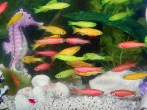 Vaastu Tips Place Aquarium At Home