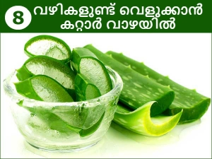 Beauty Benefits Of Using Aloe Vera For Skin Care And More