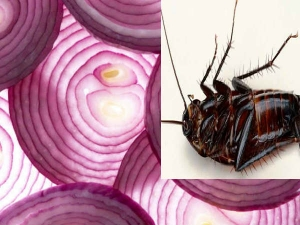 Home Remedies Kill Cockroaches