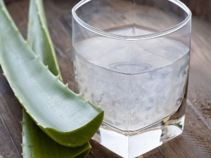 Health Benefits Drinking Aloe Vera Juice With Garlic Juice