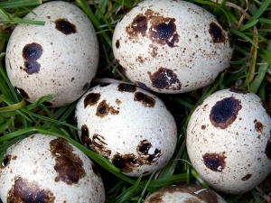 Health Benefits Eating Quail Eggs