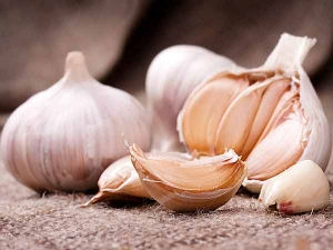 How To Lose Belly Fat Fast By Using Garlic And Lemon