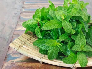 How To Use Peppermint Oil For Hair Growth And Baldness