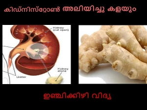Ginger Remedies Kidney Stones