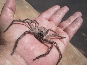 23 Easy Remedies To Get Rid Of Spiders