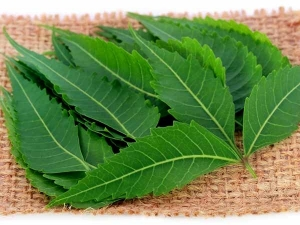 Health Benefits Drinking Neem Leaves Boiled Water