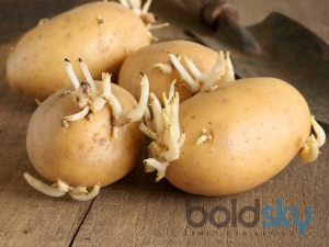 Side Effects Of Sprouting Potatoes