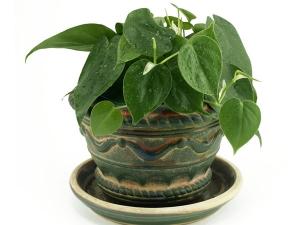 Vastu Tips Plant Money Plant Financial Gain Positive Energy