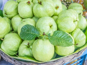 Health Benefits Of Eating Guava Daily