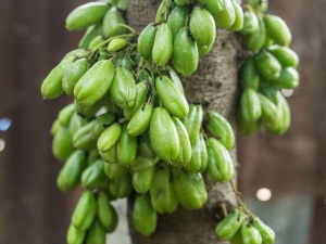How To Use Bilimbi Health