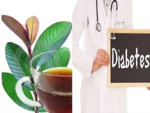 Guava Leaves Tea Control Diabetes