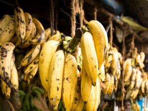 Home Remedies Using Kerala Banana Healthy Weight Gain