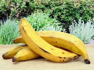 Health Benefits Eating Half Ripe Kerala Banana