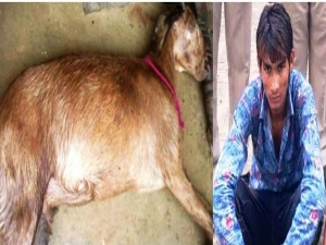Man Held Unnatural Intercourse With Pregnant Goat
