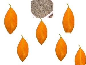 Jack Fruit Leaf Stem Cumin Seed Remedy Gas Trouble