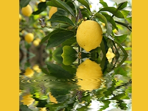 How Use Lemon Tantric Remedies Gain Wealth Success